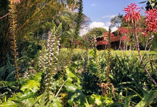 guatemala garden exotic