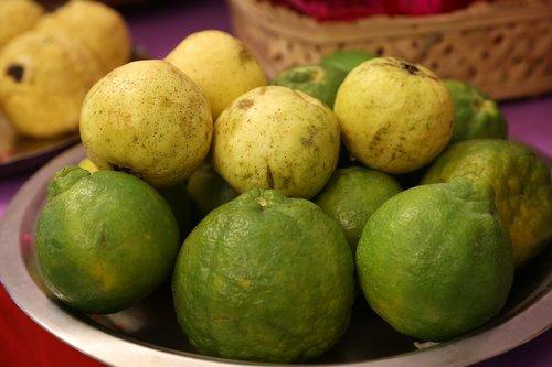 guava  indian guava  jaama kaaya