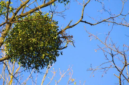 gui nature tree
