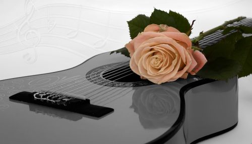 guitar rose apricot