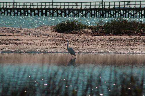 gulf,bend,bay,coastline,egret,scenic,nature,beauty