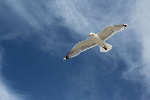 gull bird lake
