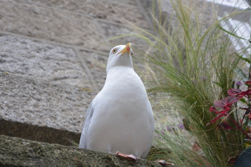 gull seabird sea