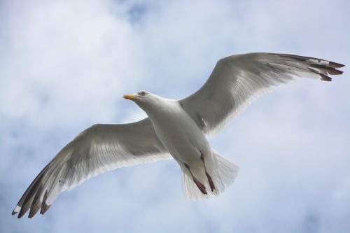 gull bird stolen