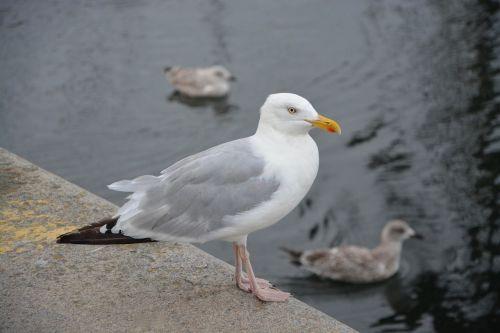 gull port sea