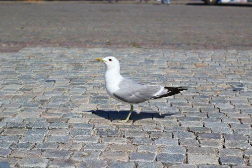 gull bird animal