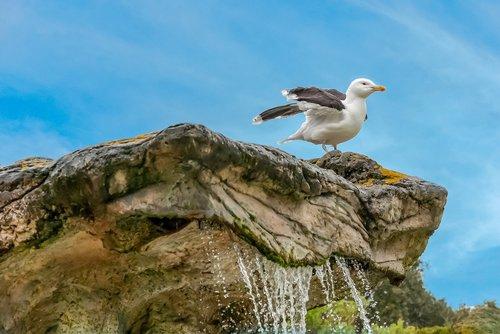 gull  sky  rock