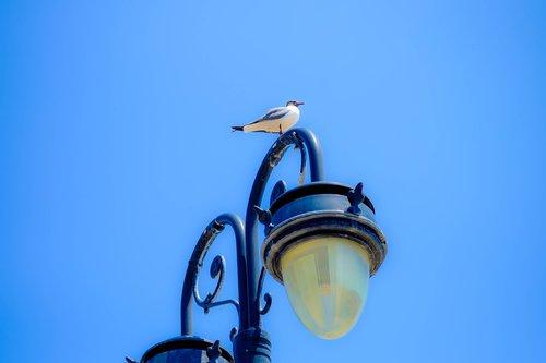 gull  bird  lamppost