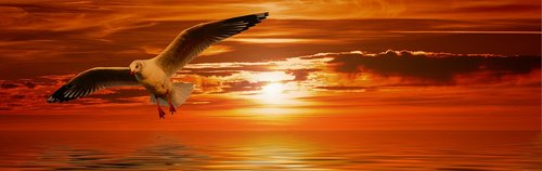 gull  bird  flying
