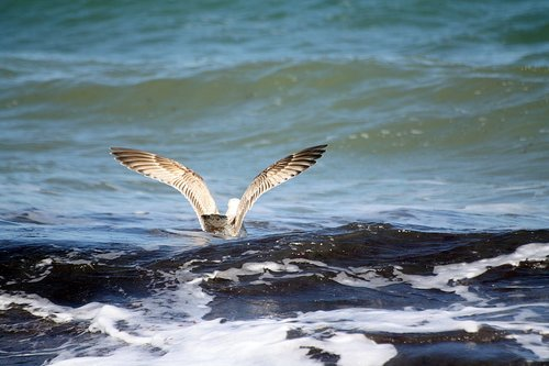 gull  animal  bird
