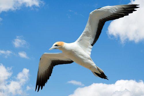 Gull Flying In Sky