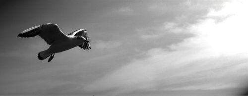 gulls animals birds
