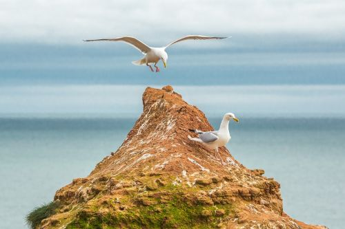 gulls ocean reefs