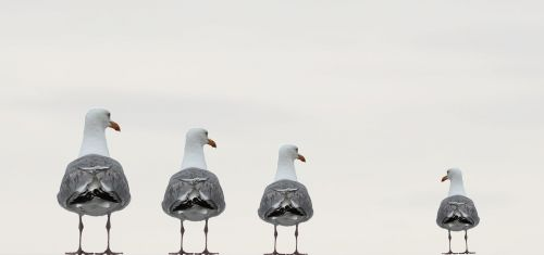 gulls fun photo composing