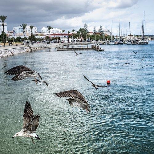 gulls  port  portugal