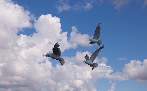 gulls  birds  expensive