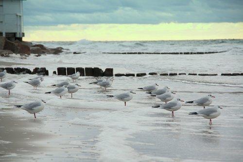 gulls  sea  beach