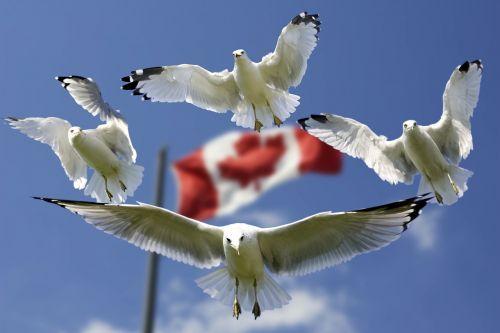 gulls formation flag
