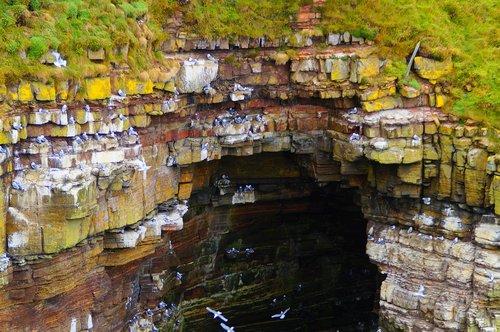 gulls rock  erosion  cliff