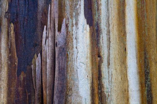 gum tree sap colours