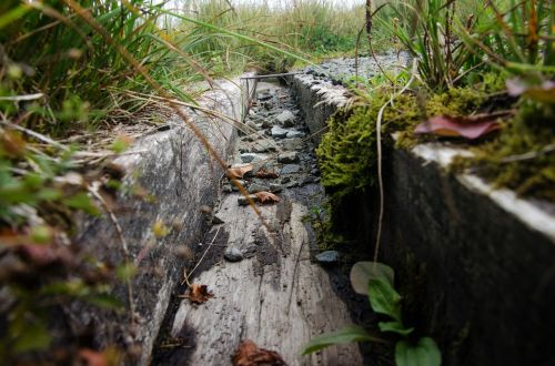 latakai,mediena,vanduo,lietus,žolė,senas,medienos dėklas,drėkinimas,gully
