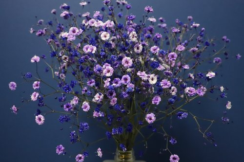 gypsophila  flowers  bouquet