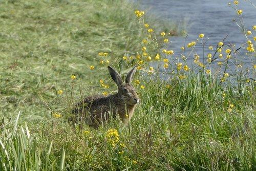 haas  pasture  grass