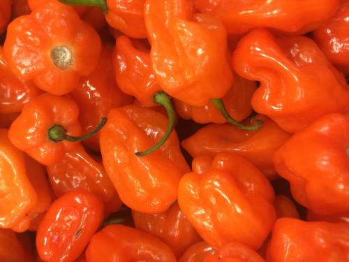 habanero pepper spicy