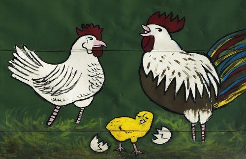 hahn chicken graphic