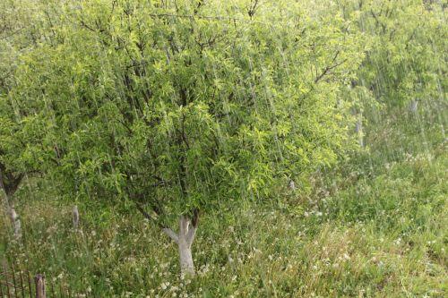 hail raindrops rainfall