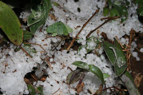 Hailstones Between Plants