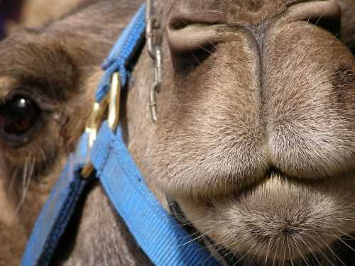 hairs snout mammal