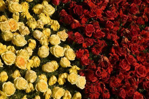 Half And Half Roses