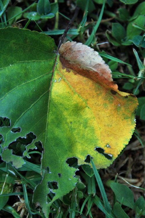 Half Eaten Leaf 2