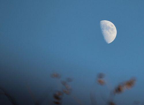 half moon lunar luna