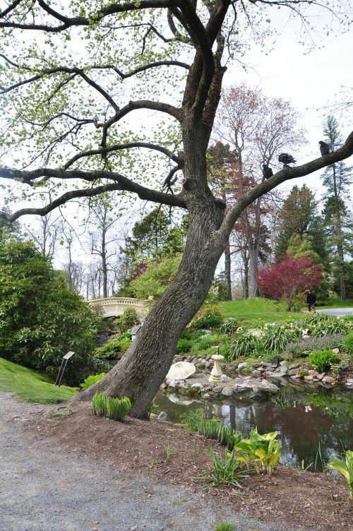 halifax public gardens lake
