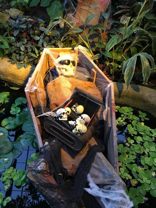halloween coffin spooky
