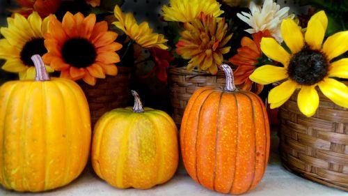 halloween pumpkin holiday