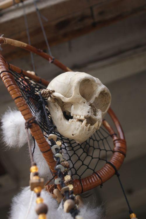 halloween skull halloween skull