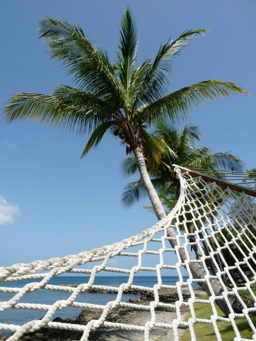 hammock palm tree perspective