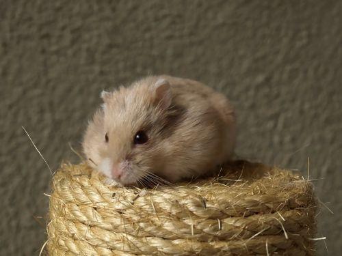hammy hamster cat scratch post