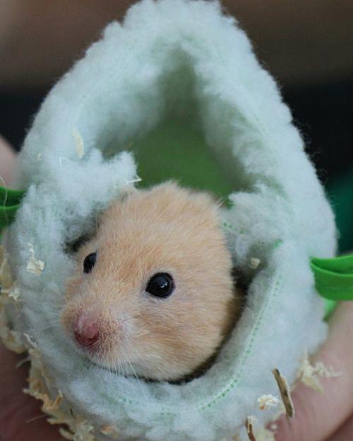 hamster bounty sleeping bag