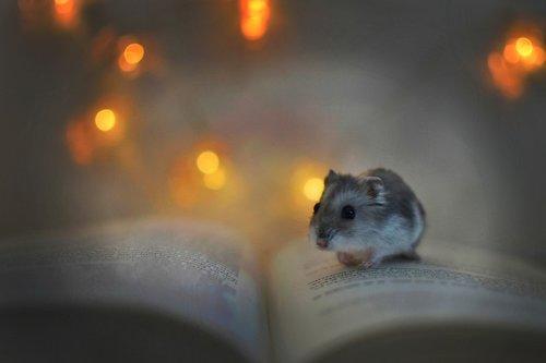 hamster  book  lights