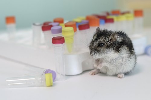 hamster  background  pcr tube