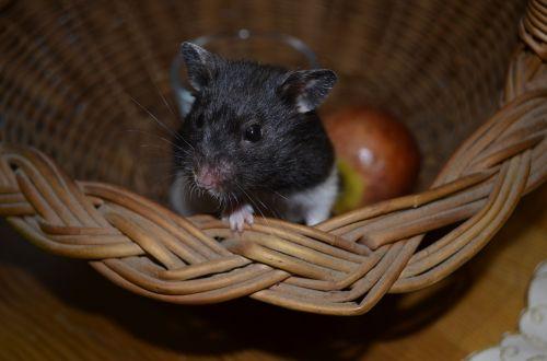 hamster animal muzzles