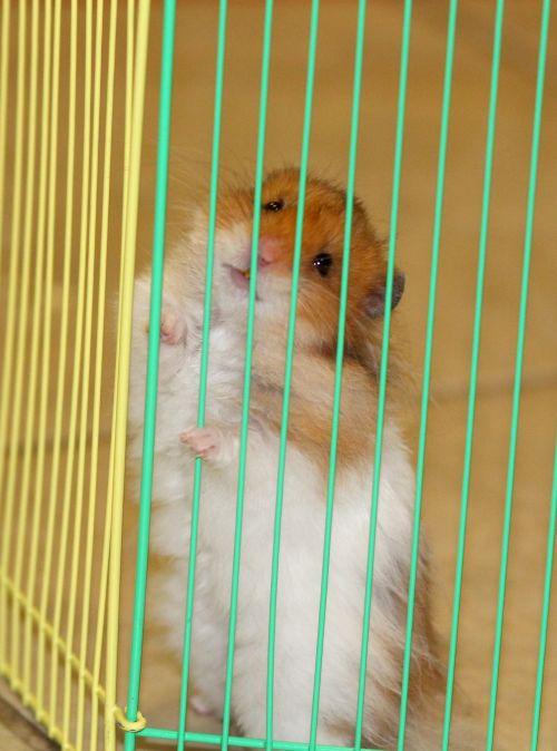 Hamster Behind Bars