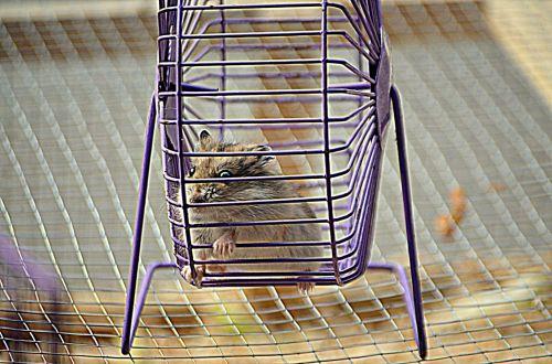 Hamster Wheel (a)
