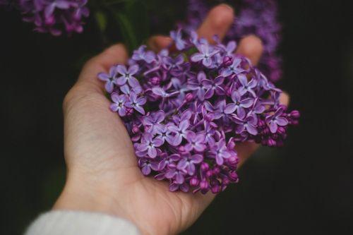 hand flowers violet