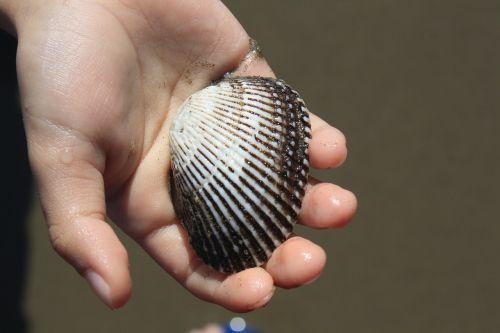 shell seashell shellfish