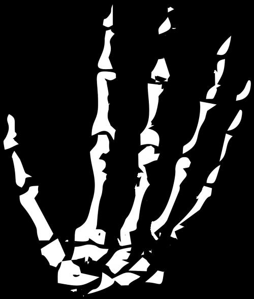 hand skeleton skeleton hand